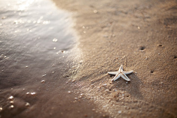 Starfish and a wave