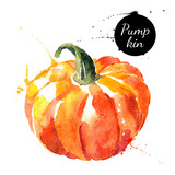 Fototapety Pumpkin. Hand drawn watercolor painting on white background.
