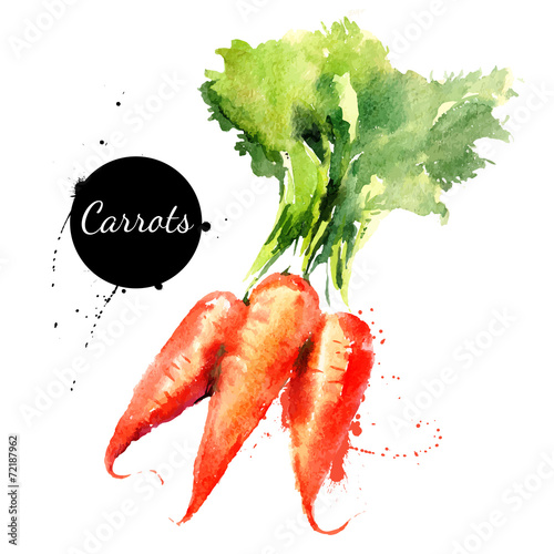 Carrots. Hand drawn watercolor painting on white backgroundΠ- 72187962