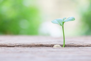 Growing plant on wooden table