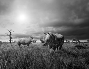 rhinos and zebra