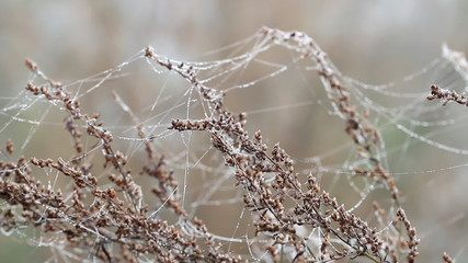 branch with dew drops on spider cobweb