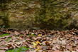 canvas print picture - dry foliage under an old rocky wall