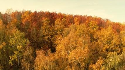 Baum Bäume Wald Herbst Überflüg Flug