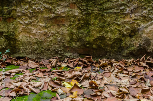canvas print picture dry foliage under an old rocky wall