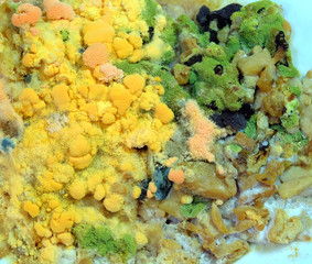 mold test on the food