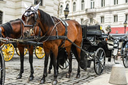 Deurstickers Wenen Horse drawn carriage