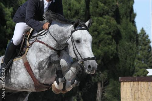 Foto op Aluminium Paardensport Über dem Hindernis