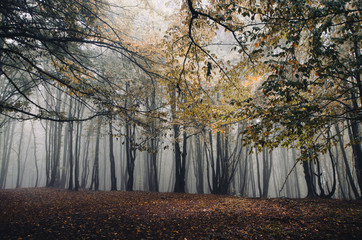 autumn in foggy forest
