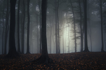 dark autumn forest with fog and colorful fallen leaves