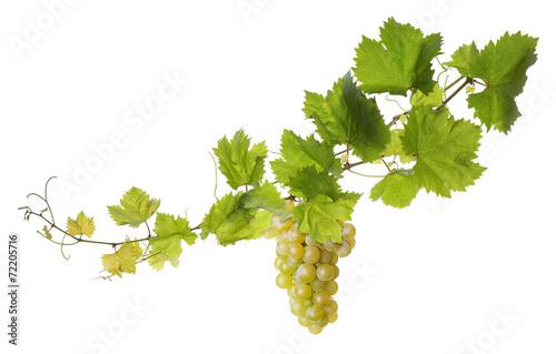 Vine leaves isolated on white - 72205716