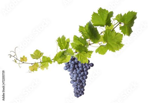 Vine leaves isolated on white - 72205759