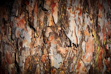 Pine cortex background