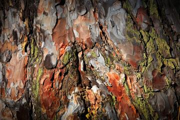 Pine cortex