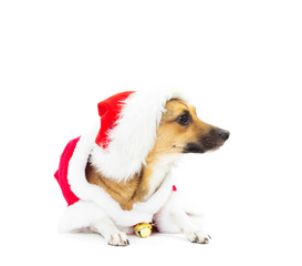 funny dog in Christmas costumes lying on white background isolat