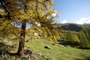 Autunno in Val d'Ayas
