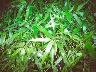 Retro look Bamboo