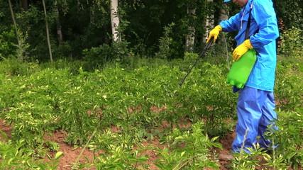 Gardener man in waterproof workwear spray potato plants