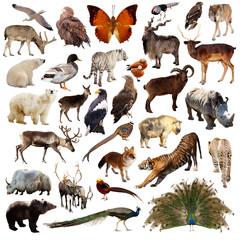 Set of  asian animals. Isolated on white