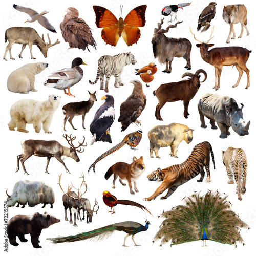 Fotobehang Uil Set of asian animals. Isolated on white