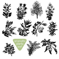 Aromatic Herbs Hand Drawn Silhouettes