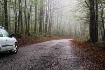 Car on a road in the forest in autumn