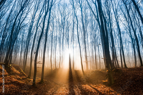 Beautiful morning scene in the forest