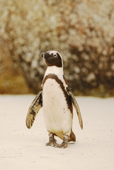 Penguin on the beach