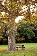 panchina vuota in un parco
