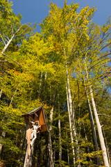 Marterl mit Bäumen im Herbst im Allgäu