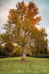 albero e panchina vuota