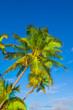 canvas print picture - Rest in Paradise - Malediven -  Himmel, Strand und Palmen