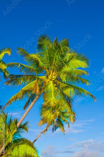 canvas print picture Rest in Paradise - Malediven -  Himmel, Strand und Palmen