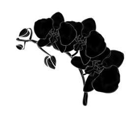 Orquídeas negras