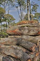Tas de bois en forêt,Picardie