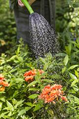 Blumen giessen, watering flowers
