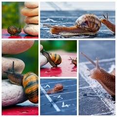 Snail business metaphor