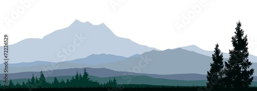 silhouette of coniferous forests for you design - 72226529