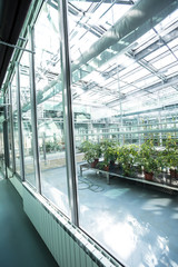Greenhouse series - inside a greenhouse