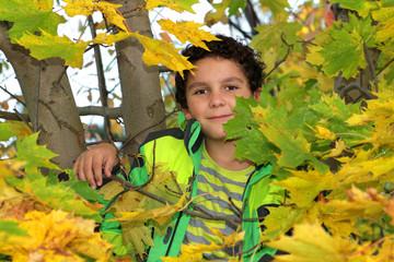 Junge im Ahornbaum