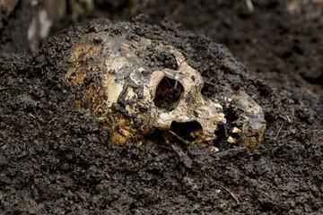 Genuine human skull figured as crime scene, very narrow focus