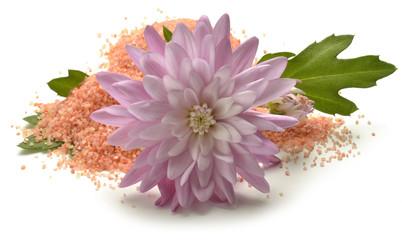 Chrysanthemum Krizantema Złocień Mums Crisantemos Crisantem0