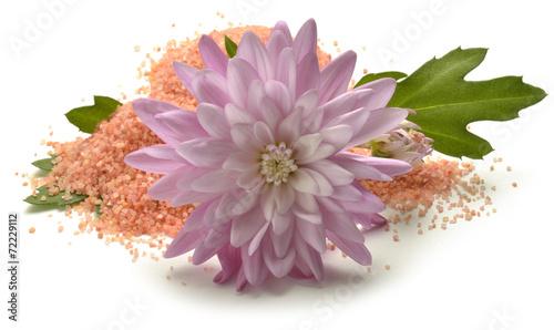 canvas print picture Chrysanthemum Krizantema Złocień Mums Crisantemos Crisantem0