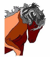 cavallo stallone su sfondo bianco