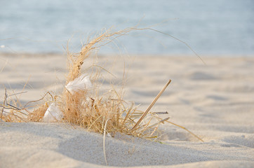 feathers in dried beach grass in sand