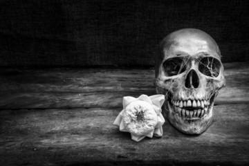 Still life with a skull human.