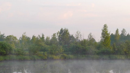 Early morning on the river with a lone tree