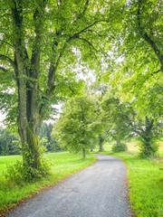 avenue tree green nature