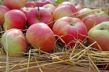 Apples closeup on straw