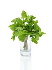 bunch of fresh mint in shot glass